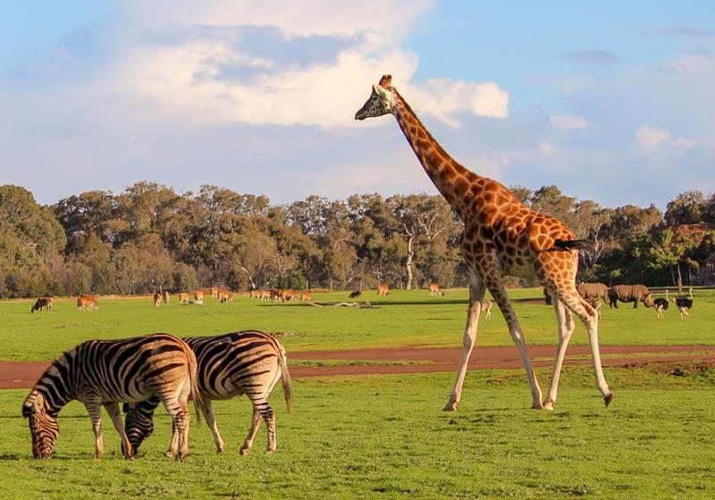 Melbourne Zoo - Destination page